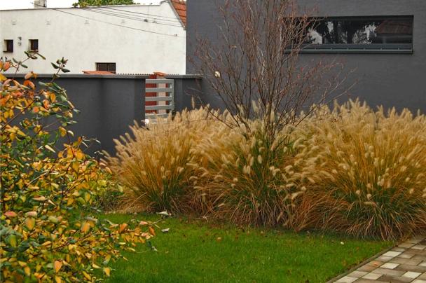 Záhrada v Dolnej Strede pennisetum
